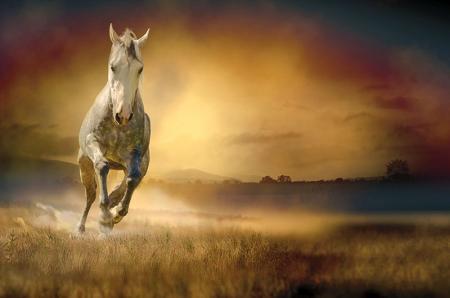 Koşan Beyaz At resim