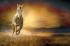 Koşan Beyaz At k0