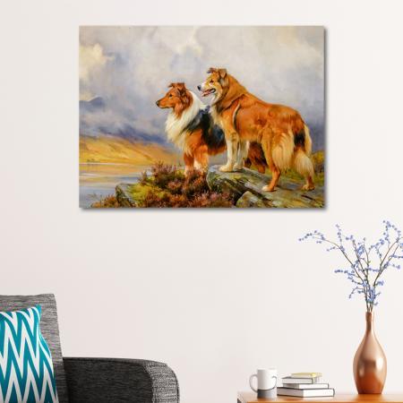 Lassie resim2
