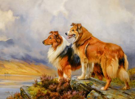 Lassie resim