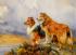 Lassie k0