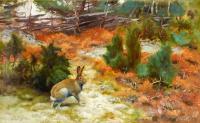 Tavşan - HT-C-036