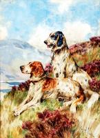 Av Köpekleri - HT-C-058