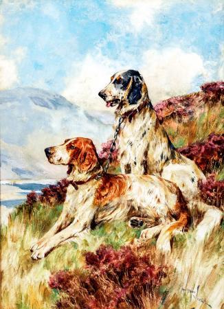 Av Köpekleri resim