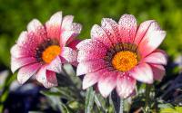Bahar Çiçekleri - CT-C-190
