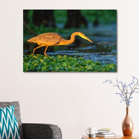 Balıkçıl Kuş resim2