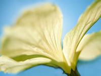 Beyaz Çiçek - CT-C-258