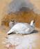 Beyaz Keklikler k0