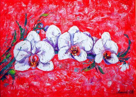 Beyaz Orkide resim
