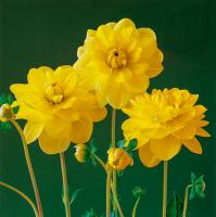Çiçek - CT-C-195