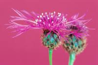 Çiçek - CT-C-196