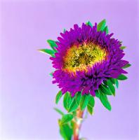 Çiçek - CT-C-197