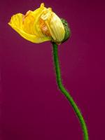Çiçek - CT-C-205