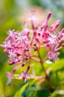 Çiçek - CT-C-215