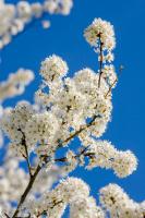 Çiçek - CT-C-218