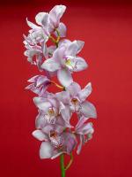 Çiçek - CT-C-219