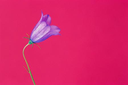 Çiçek Dalı 0