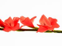 Çiçek Dalı - CT-C-159