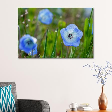 Çiçek ve Su Damlaları resim2