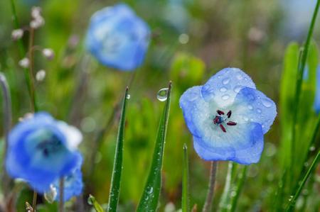 Çiçek ve Su Damlaları resim