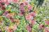 Çiçekli Dallar k0