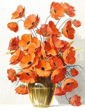 Cineraria Çiçeği resim