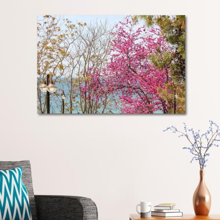 Deniz ve Çiçek Açan Ağaçlar resim2