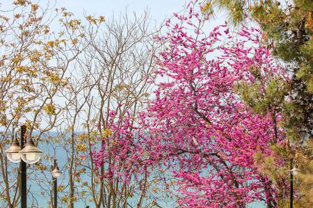 Deniz ve Çiçek Açan Ağaçlar 0