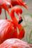 Flamingo k0
