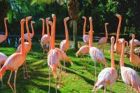 Flamingolar - HT-C-107