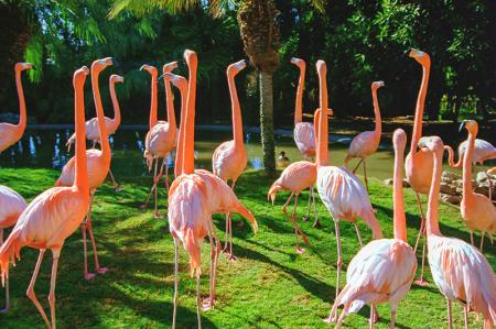 Flamingolar 0