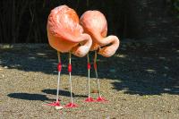 Flamingolar - HT-C-141