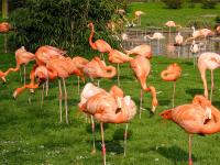 Flamingolar - HT-C-180