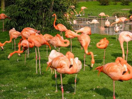 Flamingolar resim