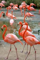 Flamingolar - HT-C-182