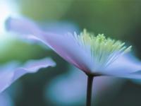 Flower - CT-C-261