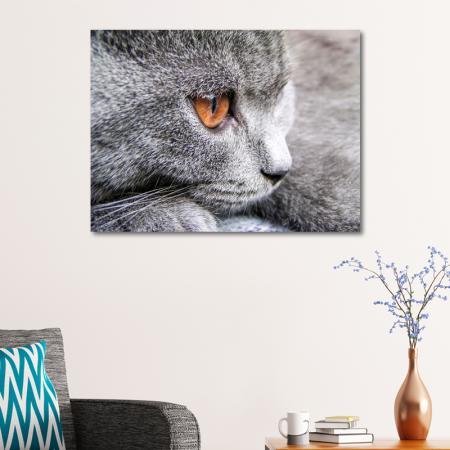 Gri Kedi resim2