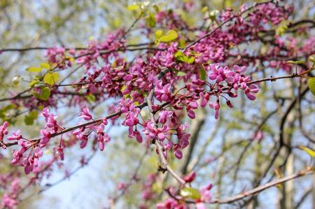 İlkbahar Çiçekleri resim