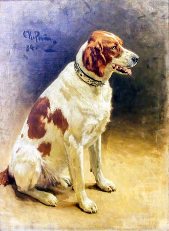 Kahverengi Köpek resim