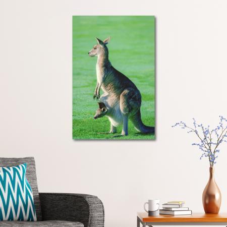 Kanguru resim2