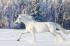 Karlar Üzerinde Beyaz At k0