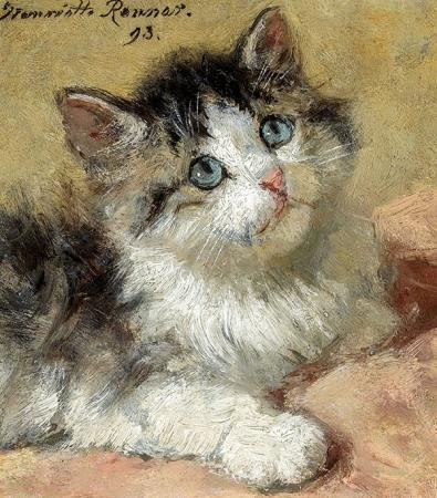 Kedi 0