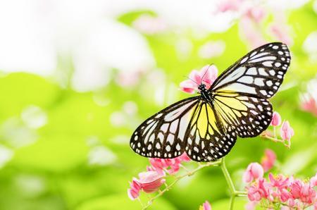 Kelebek resim