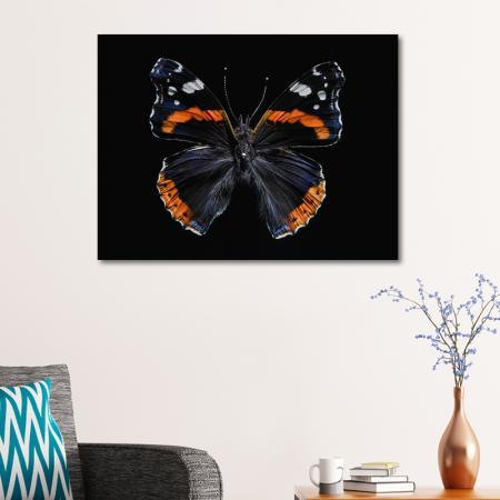Kelebek resim2