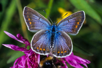 Kelebek - HT-C-157