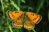 Kelebek k0