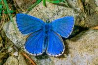 Kelebek - HT-C-161