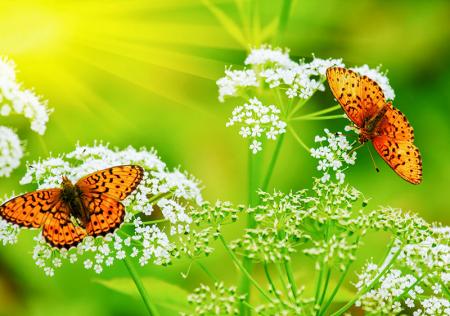 Kelebekler 0