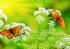 Kelebekler k0