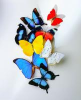 Kelebekler - HT-C-183